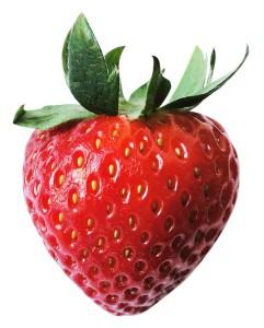 fraise_bio_roanne